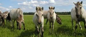 Bild Wildpferdgehege & Haustierpark Liebenthal