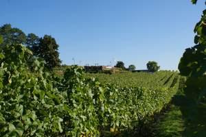 Bild Weinbau Dr. Lindicke - Werderaner Wachtelberg